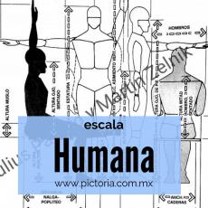 El ser humano representado por la Escala Humana