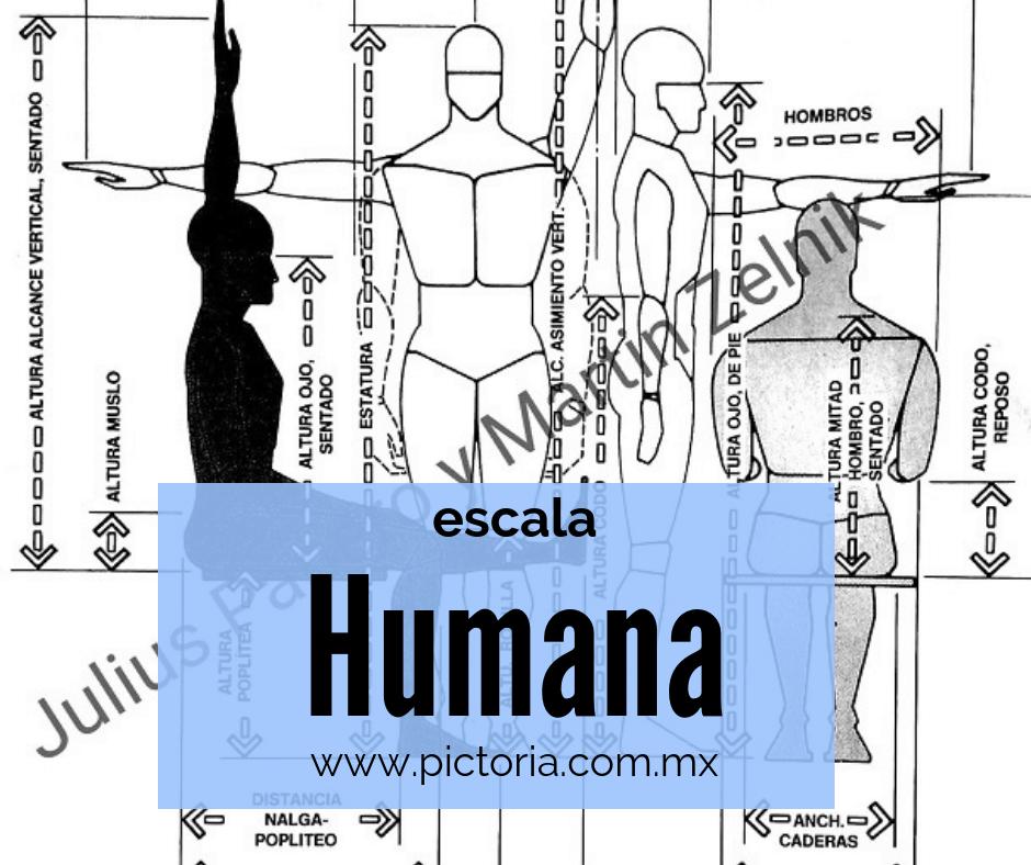 """Imagen tomada del libro """"Las dimensiones humanas en los espacios interiores"""" de Julius Panero y Martin Zelnik donde vemos a el ser humano representado por la escala humana"""